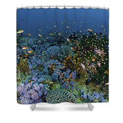 Reef Scene With Coral And Fish Shower Curtain by Mathieu Meur