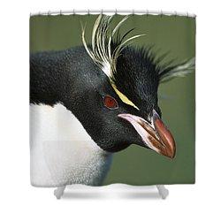 Rockhopper Penguin Eudyptes Chrysocome Shower Curtain by Tui De Roy