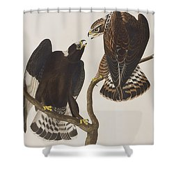 Rough-legged Falcon Shower Curtain by John James Audubon