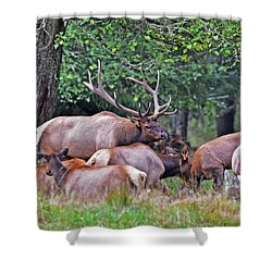 Royal Roosevelt Bull Elk Shower Curtain