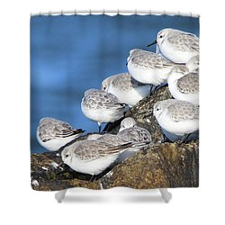 Sanderling Westhampton New York Shower Curtain by Bob Savage