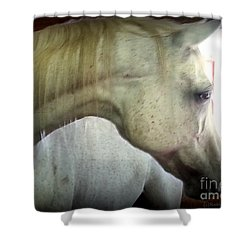 Sasa Shower Curtain