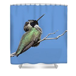 Shower Curtain featuring the photograph Sleeping Beauty by Fraida Gutovich