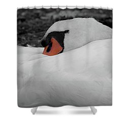 Shower Curtain featuring the photograph Sleeping Beauty by Scott Carruthers