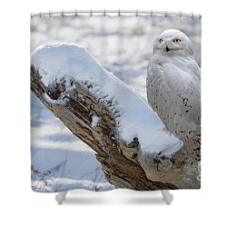 Shower Curtain featuring the photograph Snowy Owl by Jim  Hatch