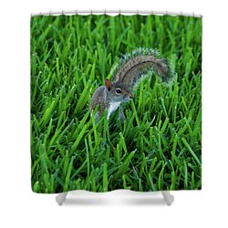 Shower Curtain featuring the photograph 2- Squirrel by Joseph Keane