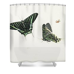 Studies Of Two Butterflies Shower Curtain by Anton Henstenburgh