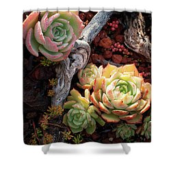 Succulents Shower Curtain