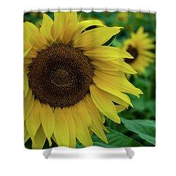 Sunflower Fields Shower Curtain by Miguel Winterpacht