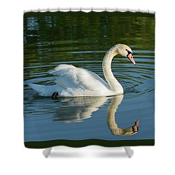 Swan Reflection Shower Curtain