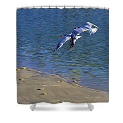 2 Terns In Flight Shower Curtain