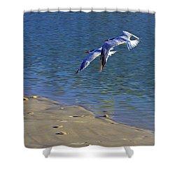 2 Terns In Flight Shower Curtain