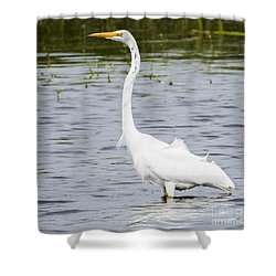 Shower Curtain featuring the photograph The Great White Egret by Ricky L Jones