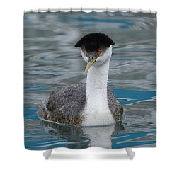 Shower Curtain featuring the photograph The Look by Fraida Gutovich