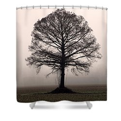 The Tree Shower Curtain by Amanda Barcon