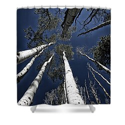 Towering Aspens Shower Curtain