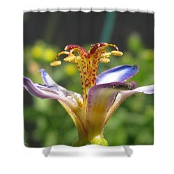 Tricyrtis Named Taipei Silk Shower Curtain