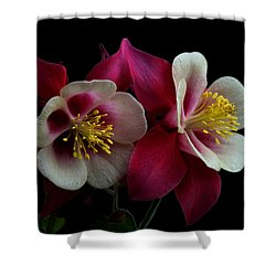 Twins Shower Curtain by Doug Norkum