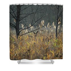 Watchful Shower Curtain by Doris Potter