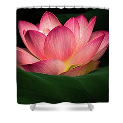 Water Lily Shower Curtain by Jay Stockhaus