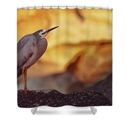 White-faced Heron At The Beach Shower Curtain