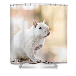 White Squirrel Shower Curtain by Vizual Studio