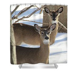 White Tailed Deer Smithtown New York Shower Curtain by Bob Savage