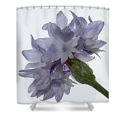 White With Blue Cornflower Shower Curtain