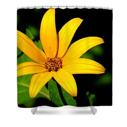 Shower Curtain featuring the photograph Wild Flower by Eric Switzer