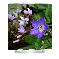 Wild Geranium Shower Curtain by Tim Good