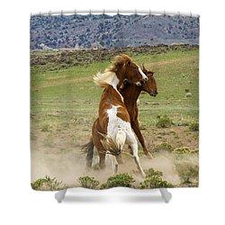 Wild Mustang Stallions Fighting Shower Curtain
