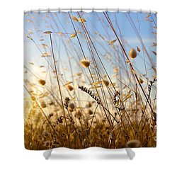 Wild Spikes Shower Curtain by Carlos Caetano
