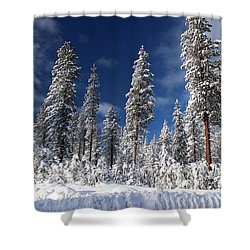 Winter Day Shower Curtain