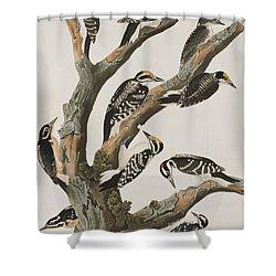 Woodpeckers Shower Curtain by John James Audubon
