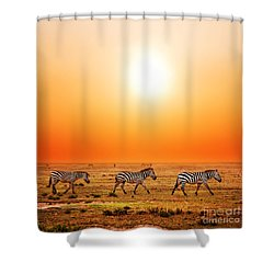 Zebras Herd On African Savanna At Sunset. Shower Curtain
