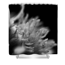 Shower Curtain featuring the photograph Black And White Flower  by Kevin Blackburn