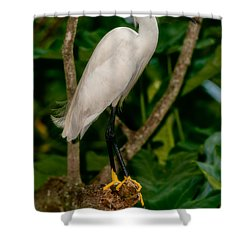 Shower Curtain featuring the photograph White Egret by Christopher Holmes