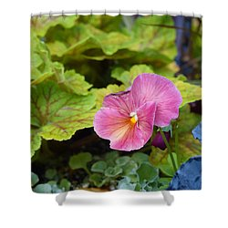 2015 After The Frost At The Garden Pansies 3 Shower Curtain by Janis Nussbaum Senungetuk
