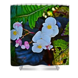2015 Early September At The Garden Begonias Shower Curtain