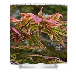 2015 Mid-september At The Garden Japanese Maple 1 Shower Curtain
