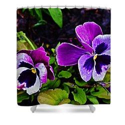 2015 Spring At Olbrich Gardens Violet Pansies Shower Curtain