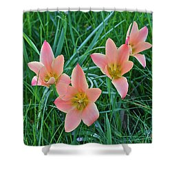 2015 Spring At The Gardens Meadow Garden Tulips 3 Shower Curtain