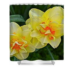 2015 Spring At The Gardens Tango Daffodil Shower Curtain