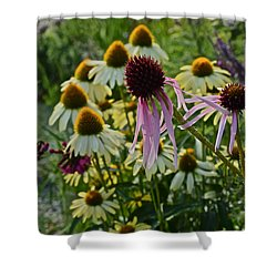 2015 Summer At The Garden Coneflowers Shower Curtain