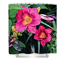 2015 Summer At The Garden Strawberry Candy Daylily 2 Shower Curtain