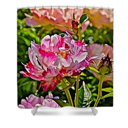 2015 Summer's Eve At The Garden Candy Stripe Peony Shower Curtain