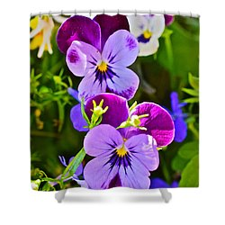 2015 Summer's Eve At The Garden Pansy Totem Shower Curtain