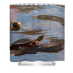 2017 Painted Turtle Shower Curtain by Edward Peterson