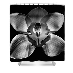 218 Fixed Background Shower Curtain
