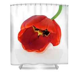 Red Tulip Shower Curtain by Elvira Ladocki